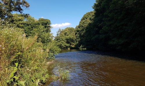 River Derwent Fly Fishing